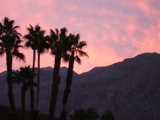 The best things to enjoy when you visit Palm Springs