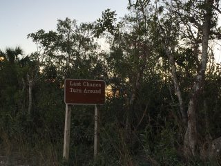 Where to see alligators in Florida, FL