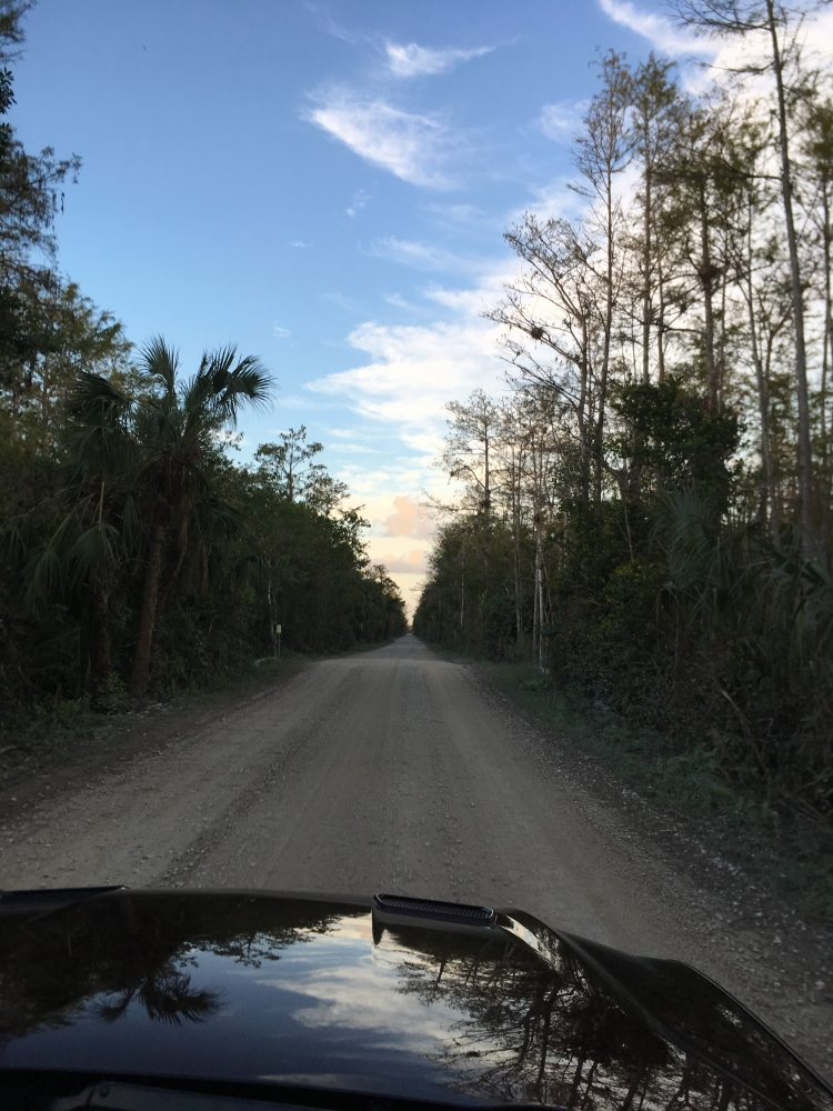 A narrow road in the Everglades