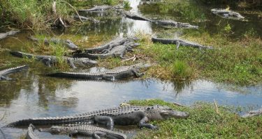 Where to stay near Everglades National Park, Florida