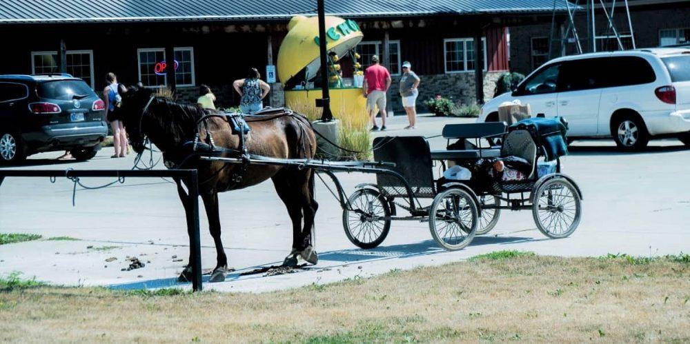 Horse drawn buggy ride in Shipshewana