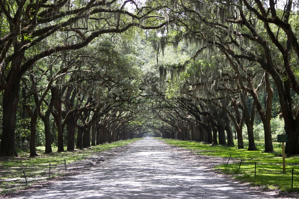 Tree lined street in Savannah so charming that it makes you come back for another trip