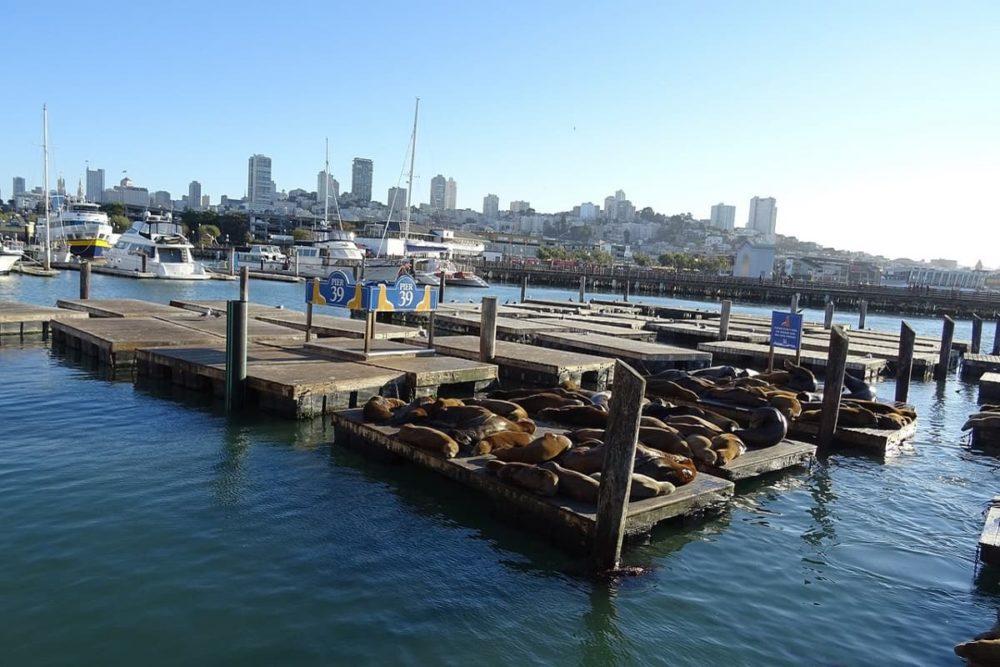 Pier 39 in San Fran of road trip route