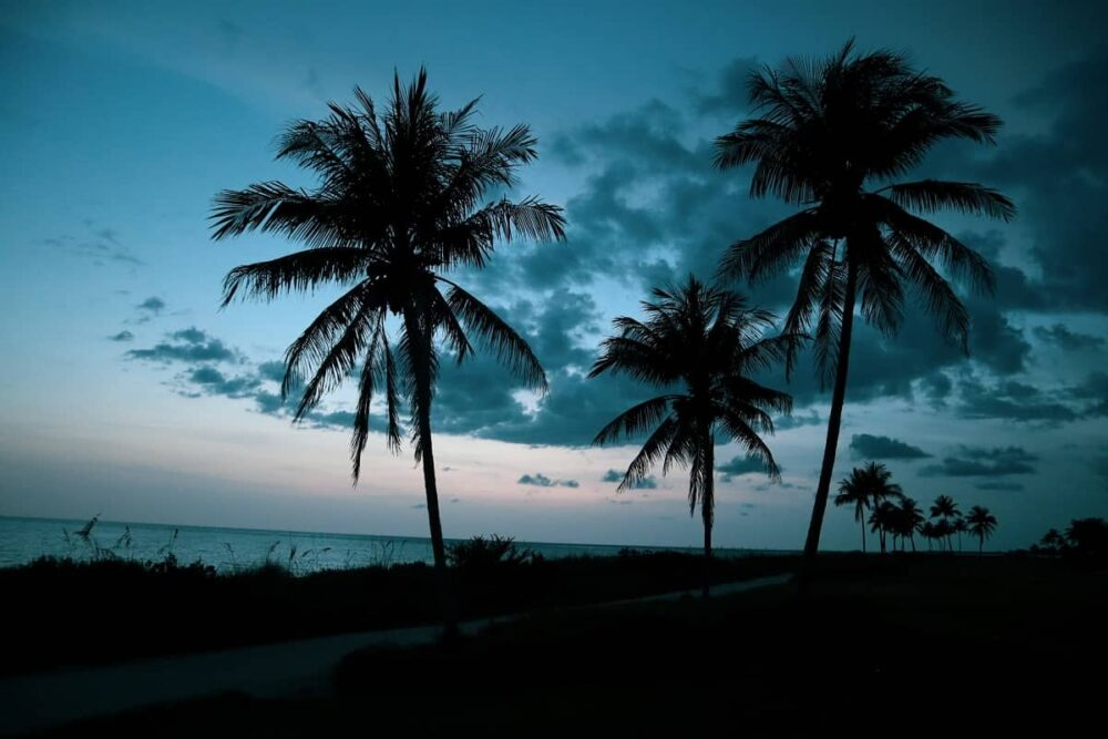 Captiva beach with palm trees