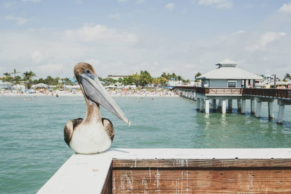 Bird on the beach in Fort Myers