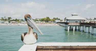Where to stay in Fort Myers