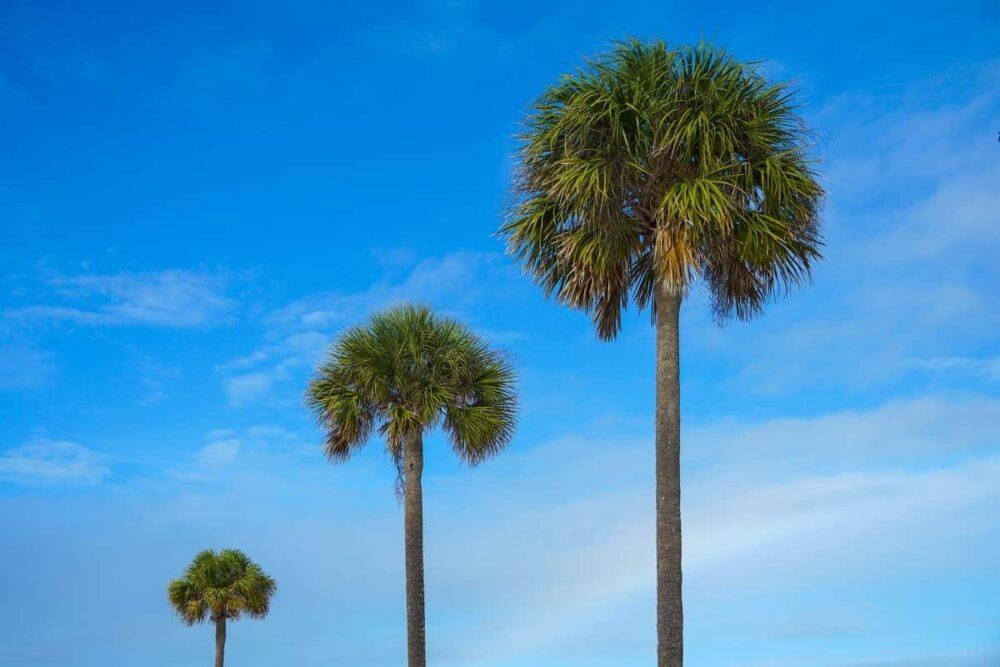 Blue Florida skies
