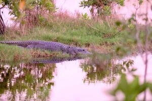 7 reasons to visit the Everglades