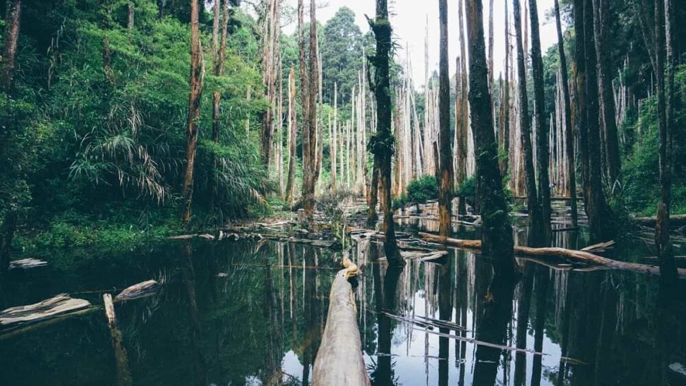 Calm water and trees in swamp