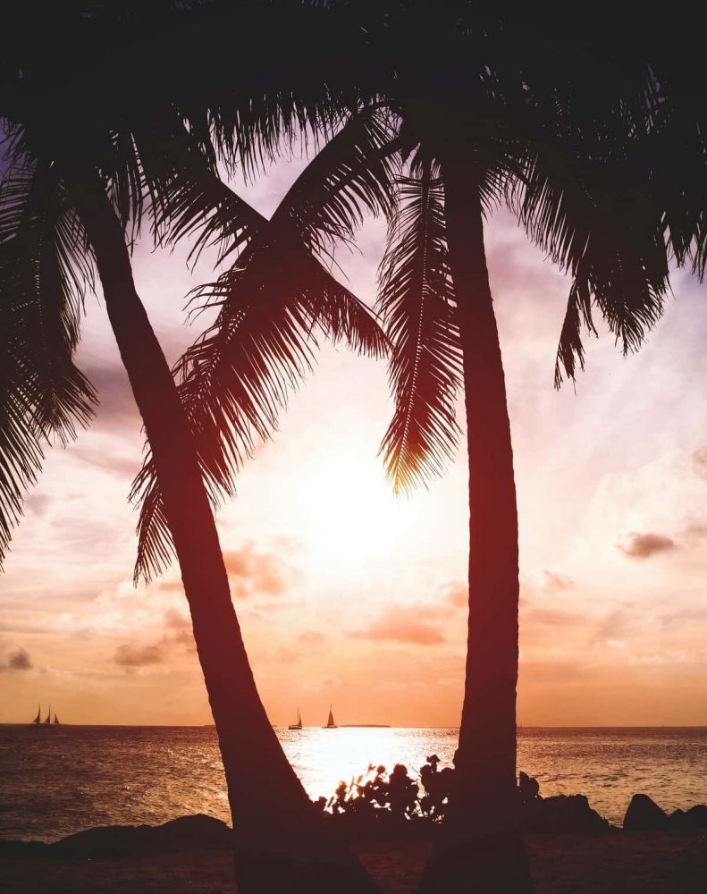 Sunset, ocean and two palm trees