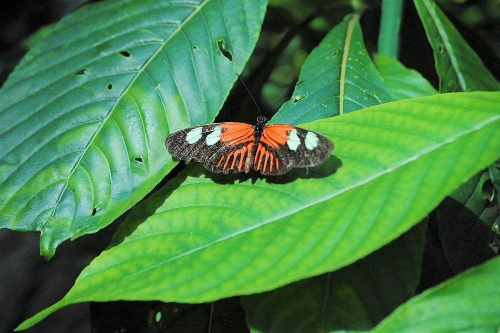 Butterfly on leaf in Key West museum