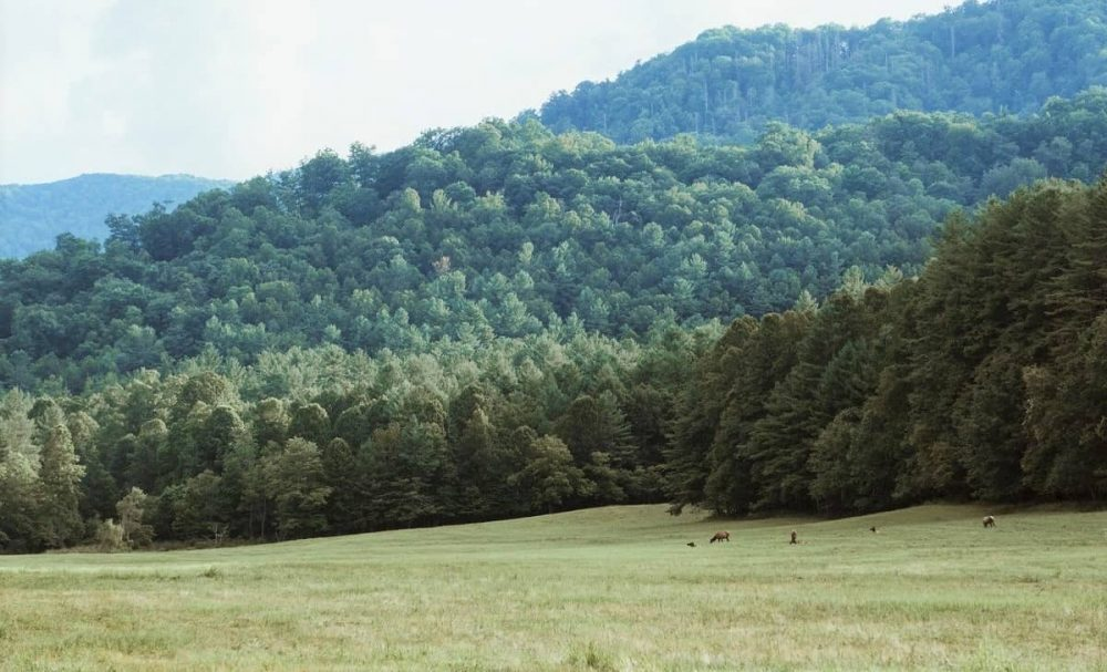 Valley with wildlife in Great Smoky Mountains NP