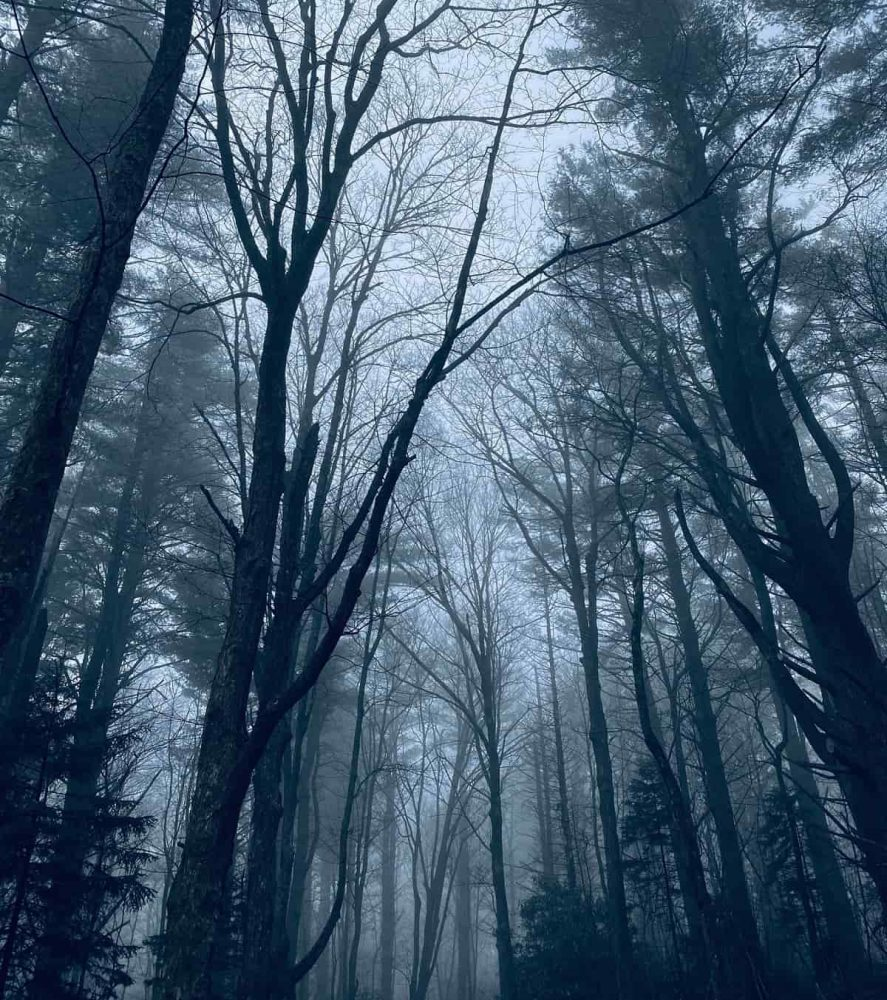 Cloudy sky and dark trees in Blowing Rock