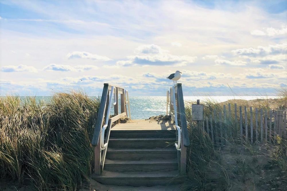 A seagull at entrance to beach in Cape Cod