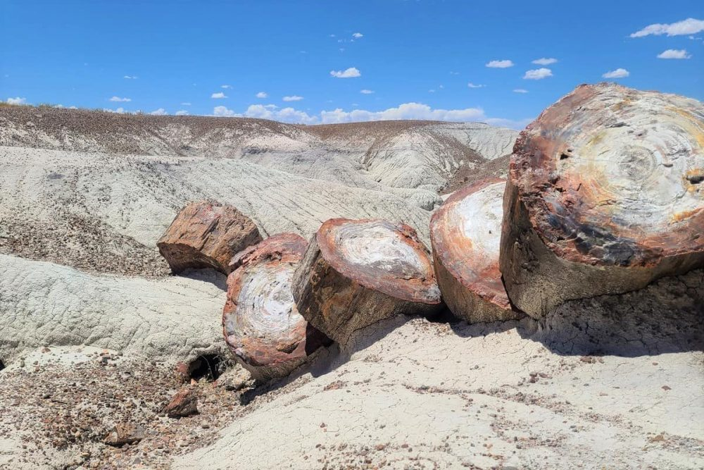 Logs in Petrified Forest National Park under blue sky