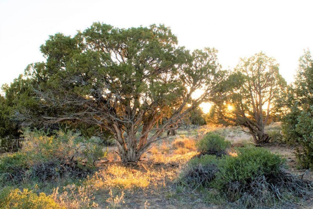 Sunrise in Dinosaur National Monument