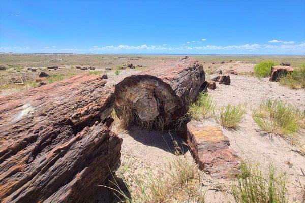 Where to stay near Petrified Forest National Park, AZ