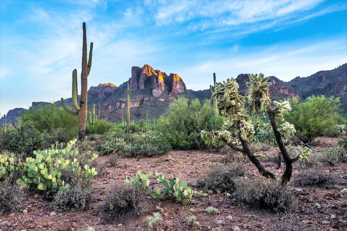 You are currently viewing Where to stay near Saguaro National Park, AZ