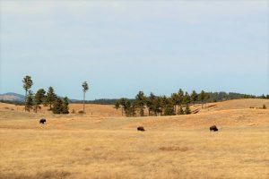 Where to stay near Wind Cave National Park, SD